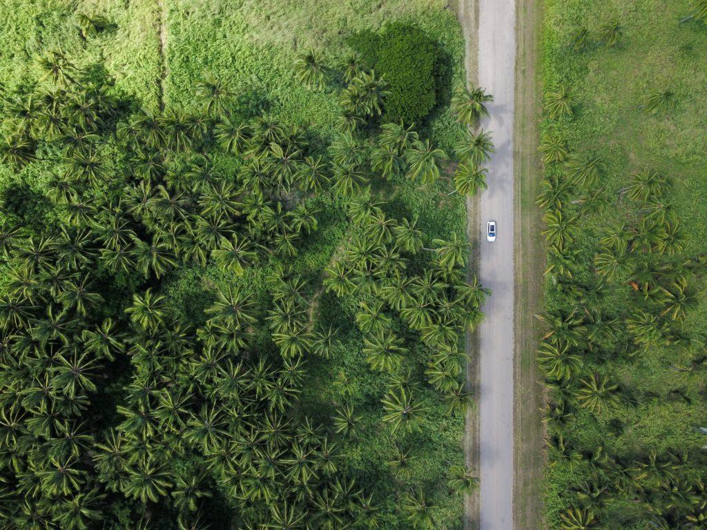 Car driving through rainforest